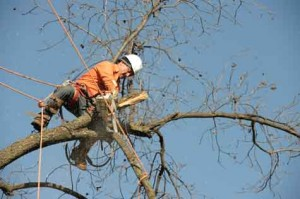 Tree Trimming and Removal Service in Arcadia OK