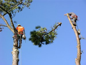 tree trimming service Moore Oklahoma