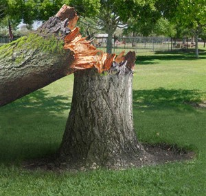 Large Tree Removal in Edmond, OK