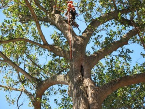 Tree Service Midwest City Oklahoma