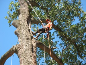 Tree Service in Arcadia Oklahoma