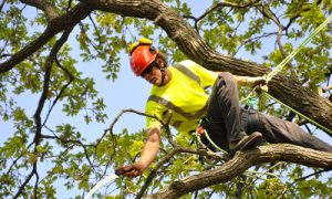 Tree Pruning Harrah Oklahoma