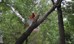 Tree Cutting Service Choctaw OK