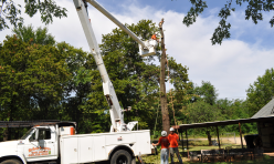 Tree Removal Company Arborscapes Tree Service