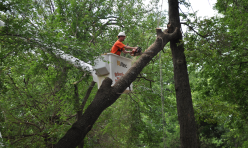 Tree Removal Company Choctaw OK