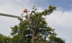 Tree Removal Company Midwest City OK