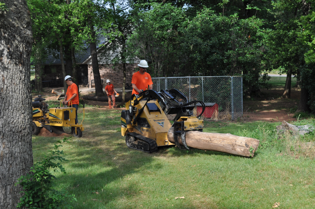 Tree Removal Midwest City
