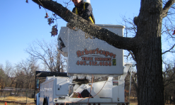 Tree Removal by Arborscapes Tree Service