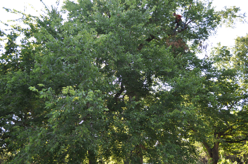 Tree Trimming Midwest City OK