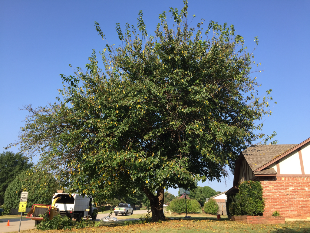 before tree trimming service by Arborscapes Tree Service