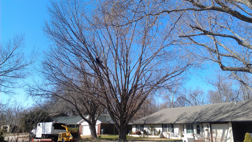 tree trimming service in Choctaw OK