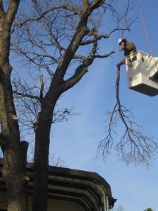 Arborscapes Tree Service Bucket