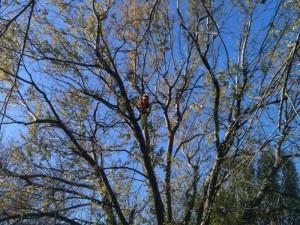 Arborscapes Tree Service