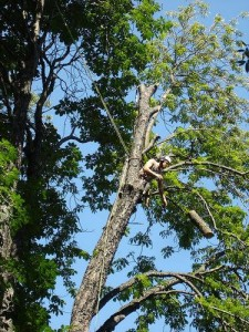 tree trimming and removal in Harrah OK