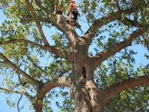 Tree Removal In Choctaw Oklahoma