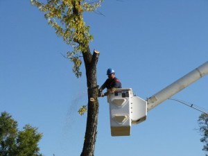 Tree Service and Removal in Harrah