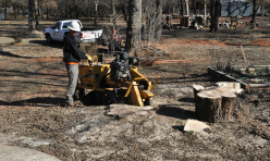 Arborscapes Tree Service Stump Grinding Service