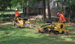 Arborscapes Tree Service Tree Removal