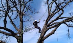 Brent Pendergraft - Arborist at work