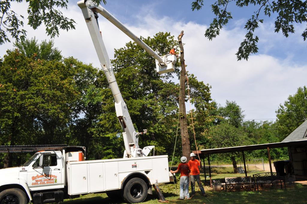 Tree Removal Company Arborscapes Tree Service