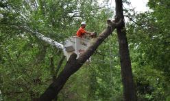 Tree Removal Company Choctaw OK