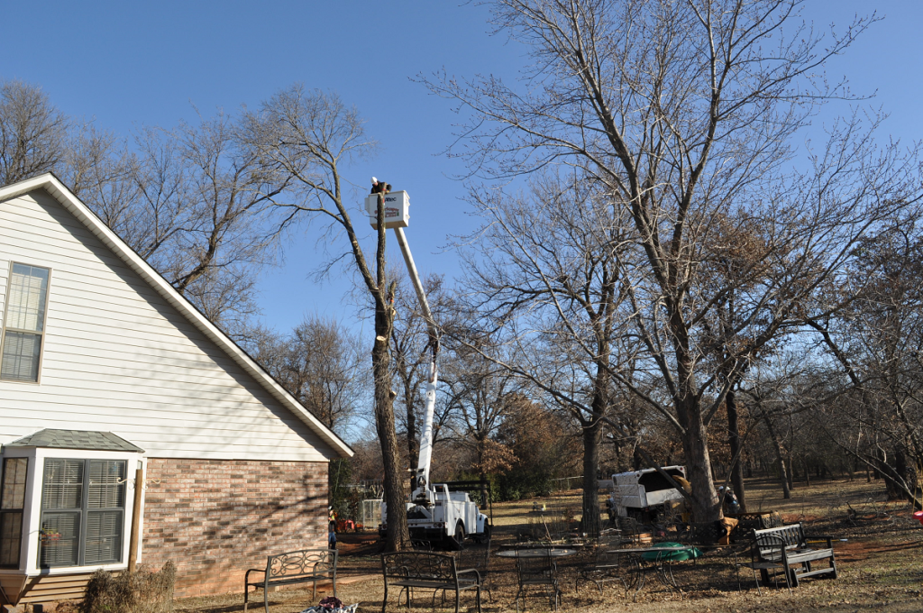 Tree Removal Company Midwest City First