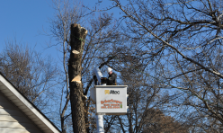 Tree Removal Company Midwest City Second