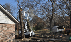 Tree Removal Company Midwest City Third