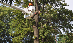 Tree Removal Midwest City OK