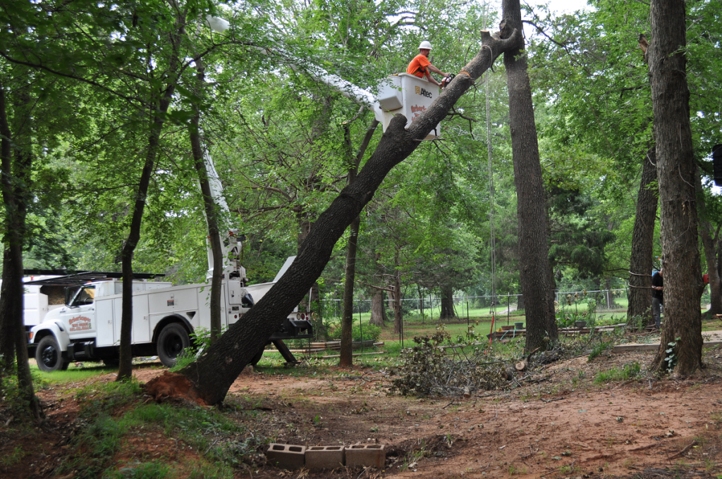 Tree Removal Services Choctaw OK